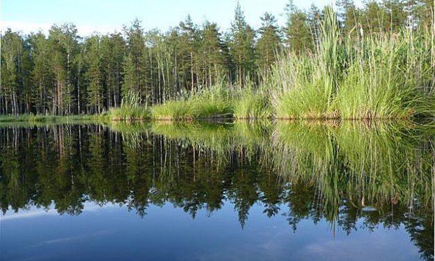 Emigratie via Estland naar Zweeds Lapland (Deel 7)