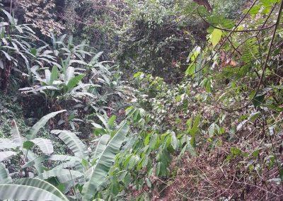 ontbossing9