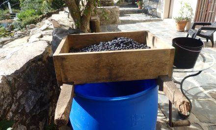 De vinoloog
