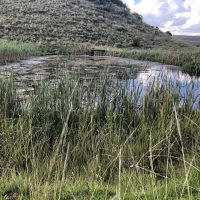 Prachtige boerderij te koop in the Freestate, Zuid-Afrika